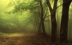 81-летний грибник потерялся в лесу