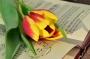 Писатели-юбиляры февраля