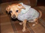 Персик в свитере