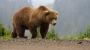 Медведи – плохие соседи!
