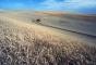Смоленский производитель зерна не гарантирует безопасность своей продукции
