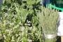 В Смоленской области сельхозпроизводитель нарушает закон о карантине растений